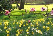 Tuin! / Ideeën voor een grote maar knusse tuin