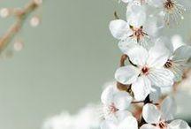 Remèdes naturels / Natural cure