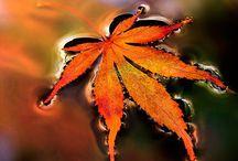 az ősz szépsége - the beauty of autumn