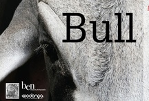 BULL Exhibition / Ben has held several exhibitions of his work. BULL, HORSE and MAN+BEAST.  His unique 3 part series has attracted wide acclaim capturing a unique display of animals and man in a rural environment.