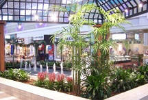 Interior Landscaping Design / Experience at Botanicus: Our goal is to help plants thrive, not just survive.  To view our full portfolio with interactive panaromic pictures, please visit botanicus.com/Portfolio