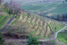 Pfalz Impressions
