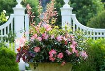 Garden Designs / The beauty of nature and art