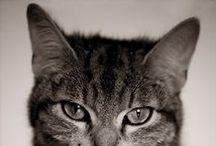 Felines / Cats Cats Cats