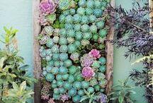 Jardin / Des trucs pour un jardin tout en beauté!