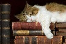 Animals and Books / Because even our furry friends can appreciate a good book!
