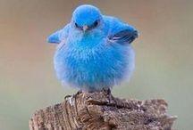 Ptaki/ birds