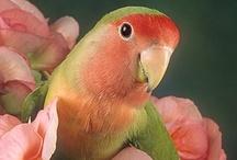 Beautiful Birds / by Britt Cunningham