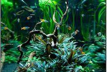 Aquatique x Nature / La vie en eau douce