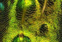 DIPLÔME - Macrophotographie x insectes / Représentation de l'insecte en photographie