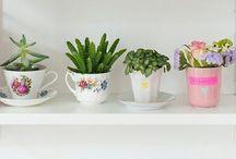 Комнатные цветы / Декор