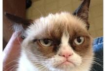 Grumpy Cat / Grumpy Cat