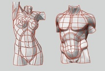 Anatomy of the Torso and Skeletal structure