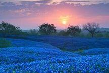 Texas / Texas