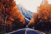 FalIing in love with fall
