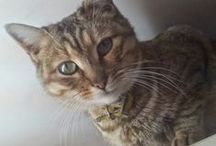 ♡ Una Vita da Gatti ♡