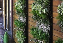 GARDENing / ... love to watch how my herbs are growing on my small balcony.. dreaming about my own garden..