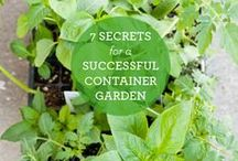 garden .:. MY BALCONY