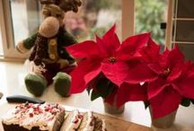 Holiday Poinsettia / Constantly updating the holiday tradition with new and unique ways of incorporating Poinsettia in your holiday decor.