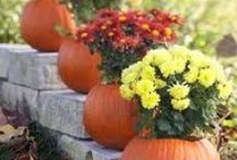 Fall Flowers / Boo! These flowers are far from spooky, but they may provide hauntingly beautiful curb appeal and shock your neighbors!