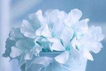 Licht blauw -Light blue
