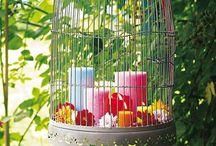 Tuin -Garden