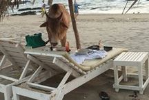 Travel: Goa / Celebrating and sharing all things about Travel in Goa