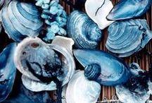   BLUE JOY  