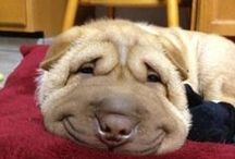 Boldog állatok