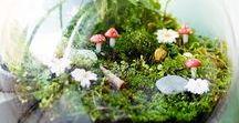Deco | Terrarium, fleurs / #terrarium #flower #diy