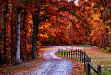 Nothing like Autumn