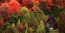 Autumn/Halloween / Autumn colors, Halloween decor, seasonal recipes, and more
