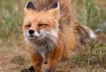 So fluffy!