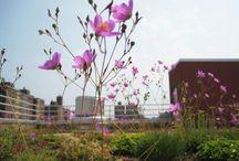 Blossoming rooftops - Bloeiende daken / by dakwaarde - roofvalue
