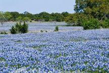 Texas / by Janie Stewart