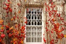 """{ falling } / """"I am so glad I live in a world where there is October's."""""""