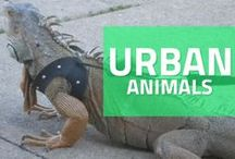 URBAN ANIMALS / Chicago pets being super adorbs.