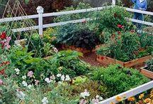 the garden that Cait grew. / my 'one-day' garden.