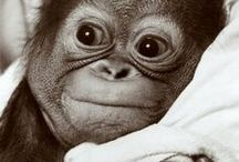 Cuties / cutest animals