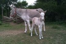 Donkeys / Learning how to take care of my donkeys.