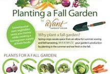 Huerta de Otoño / Fall Garden