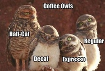 Owls - its a hoot / Owls, mainly fun ones. Great guys one and all.