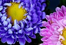 _♣_Beautiful Blooms_♣_ / by Stephani's Showoffs