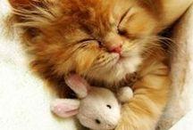 Cute Overload / Soft, cute, cuddly