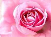 Gartenzauber ★ Basteln ★ Deko / Gestalten und Dekorieren im Garten ★  Blumen im Garten ★  Dekorieren mit Blumen ★ www.kreativzauber.de