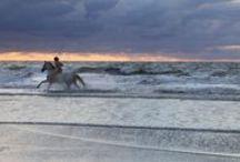 Aktivitäten Norderney / Ihr Aktivurlaub auf Norderney ►►  Machen Sie Ihren Aufenthalt auf Norderney zum Aktivurlaub der besonderen Art! Ob Wanderungen durchs Watt oder Golfen am Links-Course: Die Aktivitäten auf Norderney werden Sie begeistern. Hier finden Sie viele Infos zu den allgemeinen Freizeitangeboten auf Norderney. Wir freuen uns auf Ihren Besuch.