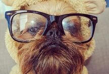 EXTRA CUTE DOGS / Random Dog Breeds, Shitzu, Brussels Griffon, Pug, Pit Bull, Pitti, mixed dog breeds, rescues and adoptions,