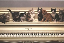 Musical Daze / by Judy Currier
