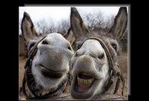 i want a donkey!