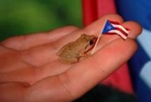 Puerto Rico where I left my heart / All about my Island. The culture, food, music, people, places and the history.  / by Lisa Flores
